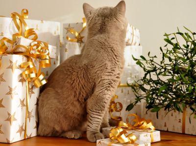 Adventskalender Katze fuellen