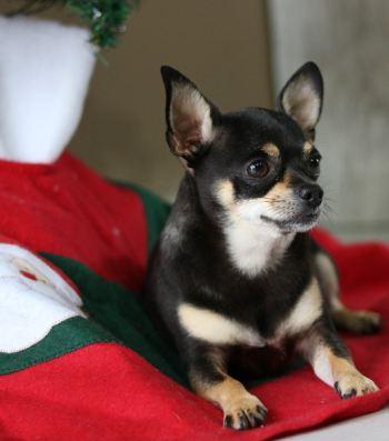 Hunde Adventskalender Ideen