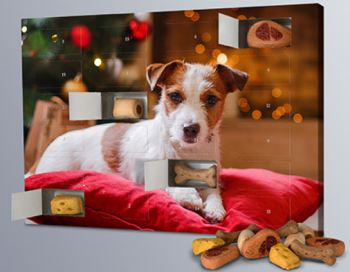 Hundefoto Adventskalender