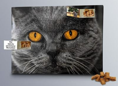 Katzen Foto Adventskalender