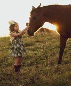 Adventskalender für Pferde und Reiter kaufen